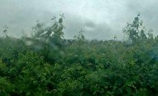 Bəzi yerlərdə yağış, dolu gözlənilir