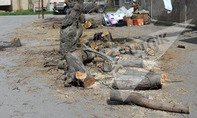 Tikinti şirkəti Bakıda ağacları kəsdi — (FOTOLAR)
