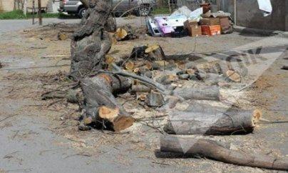 Nizami rayonunda ağacları kəsib yerində bina tikirlər - FOTO